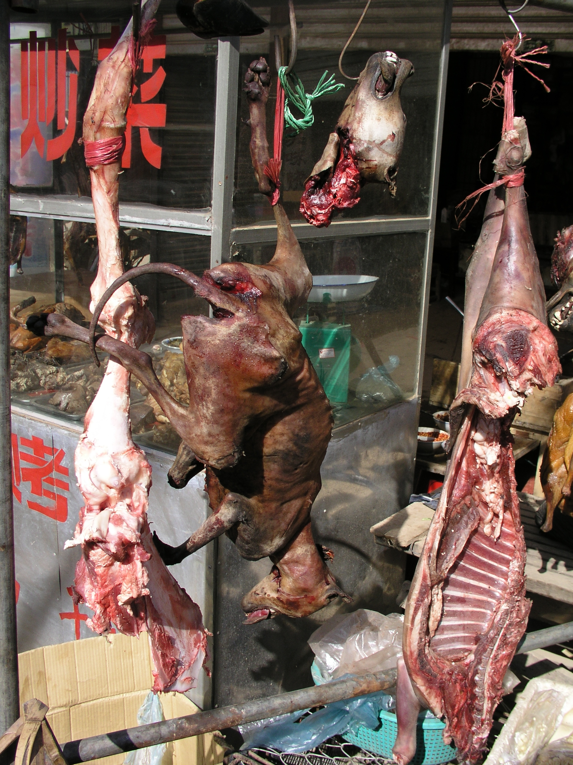 Chinese People Eating Dogs And Cats - photo#43
